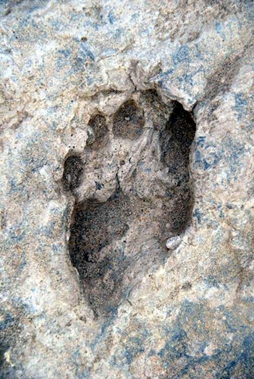 Самый старый след человека, который когда-либо был найден. Этот ископаемый след, обнаружен вблизи Илерет, Кения, его возраст составляет 1,5 миллиона лет интересное, красота, наука, окаменелости, отпечатки, прошлое