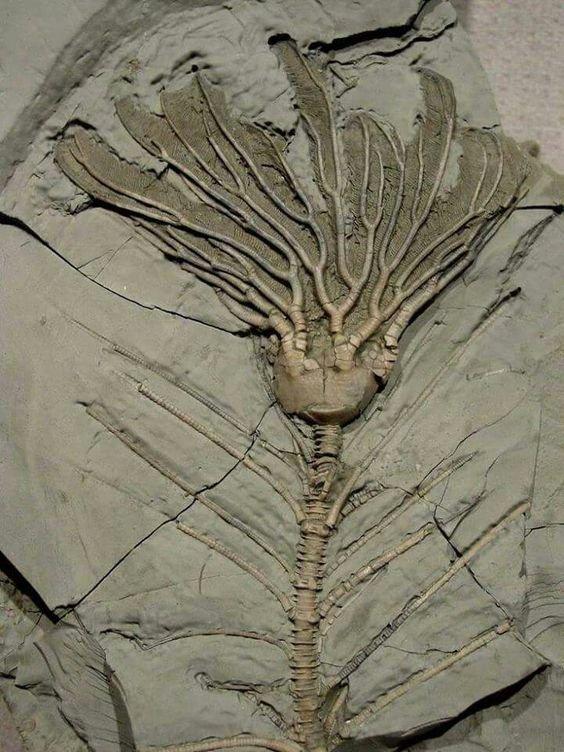 Корни растения возрастом около 300 миллионов лет интересное, красота, наука, окаменелости, отпечатки, прошлое