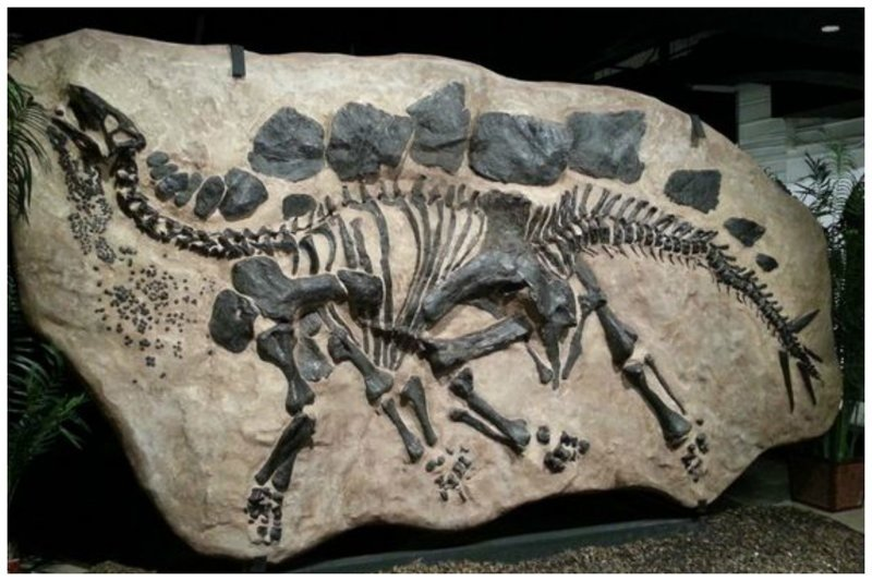 Стегозавр интересное, красота, наука, окаменелости, отпечатки, прошлое