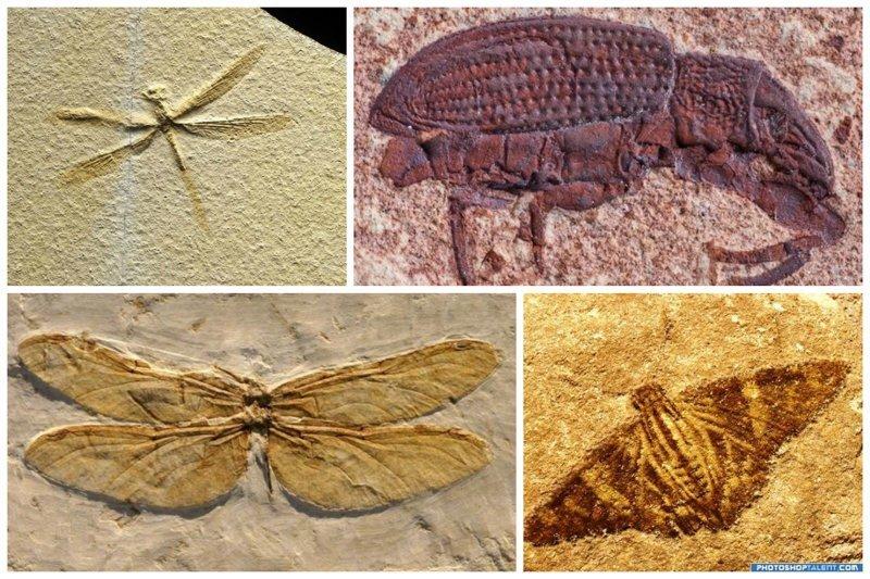 Окаменевшие насекомые интересное, красота, наука, окаменелости, отпечатки, прошлое
