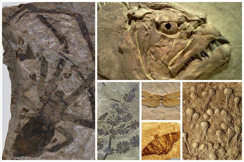 Невероятные по своей красоте окаменелости  из прошлого интересное, красота, наука, окаменелости, отпечатки, прошлое