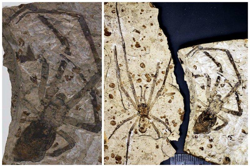 Пауки. Около 165 миллионов лет назад интересное, красота, наука, окаменелости, отпечатки, прошлое