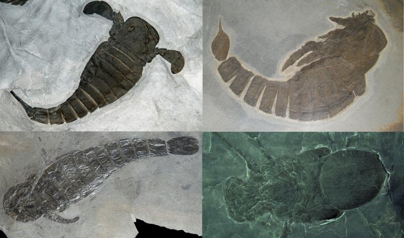 Ракоскорпионы интересное, красота, наука, окаменелости, отпечатки, прошлое