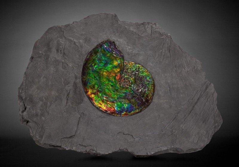 Амониты интересное, красота, наука, окаменелости, отпечатки, прошлое