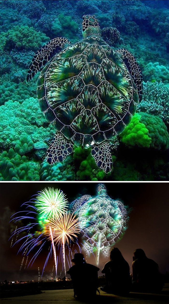 13. Морская черепашка животные, забавно, люди, подборка, фотошоп, юмор