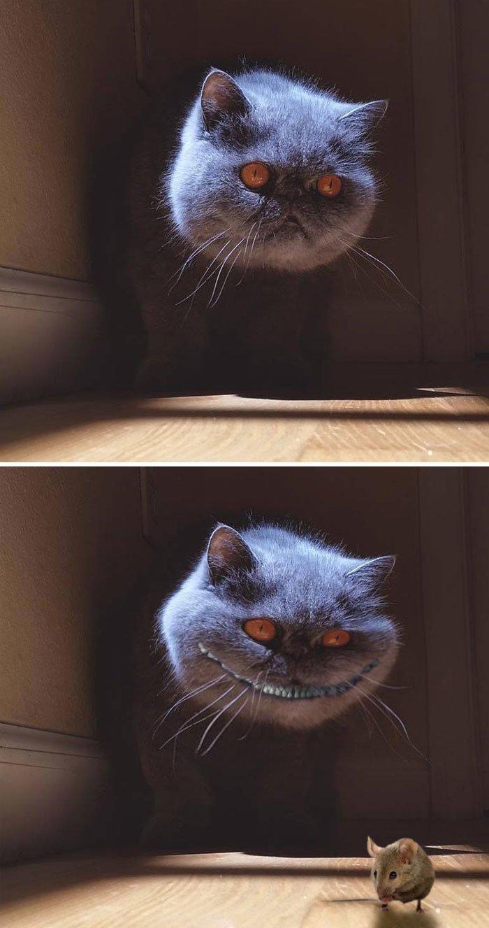 """18.  """"Чеширский"""" кот животные, забавно, люди, подборка, фотошоп, юмор"""