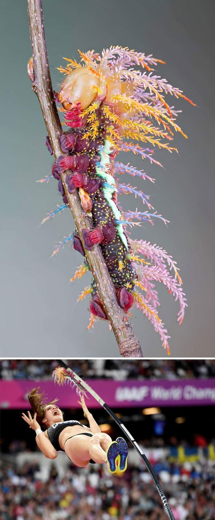 6. Гусеница одной из бабочек семейства павлиноглазки животные, забавно, люди, подборка, фотошоп, юмор