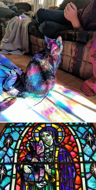 """3. Кот, """"украшенный"""" лучами света, которые проходят через цветное стекло животные, забавно, люди, подборка, фотошоп, юмор"""