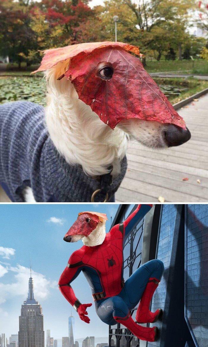 10. Собака с маской из листьев животные, забавно, люди, подборка, фотошоп, юмор