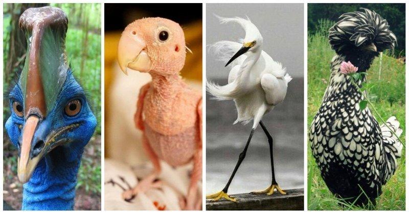 Птицы-разведёнки учат, как надо выглядеть после расставания забавно, прикол, птицы, развод, юмор