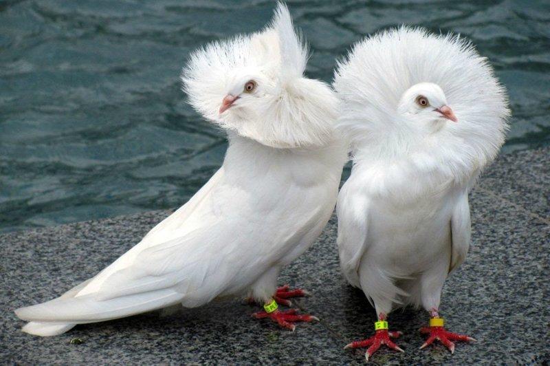 Дважды разведены и готовы к отдыху подружаек! забавно, прикол, птицы, развод, юмор