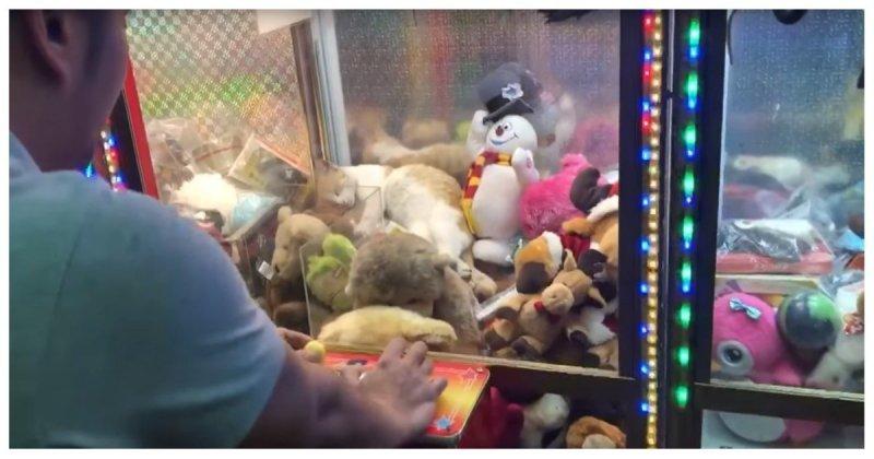 """Мужчина попытался """"выиграть"""" сладко спящую в игровом автомате кошку   автомат, видео, дубай, животные, игровой автомат, прикол, юмор"""