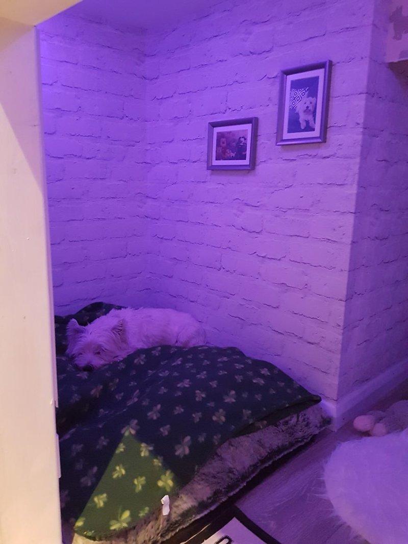 Уютная спальная зона идея, интерьер, комната, лестница, своими руками, собака, строительство