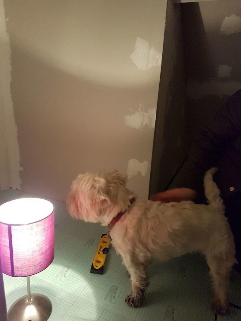 Собака во всем старалась помочь хозяину идея, интерьер, комната, лестница, своими руками, собака, строительство