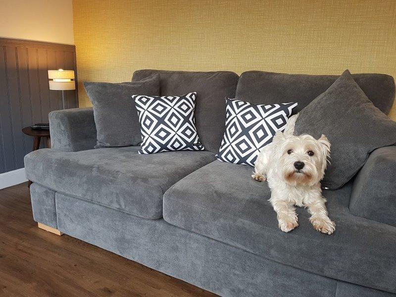 Собака на любимом хозяйском диване идея, интерьер, комната, лестница, своими руками, собака, строительство