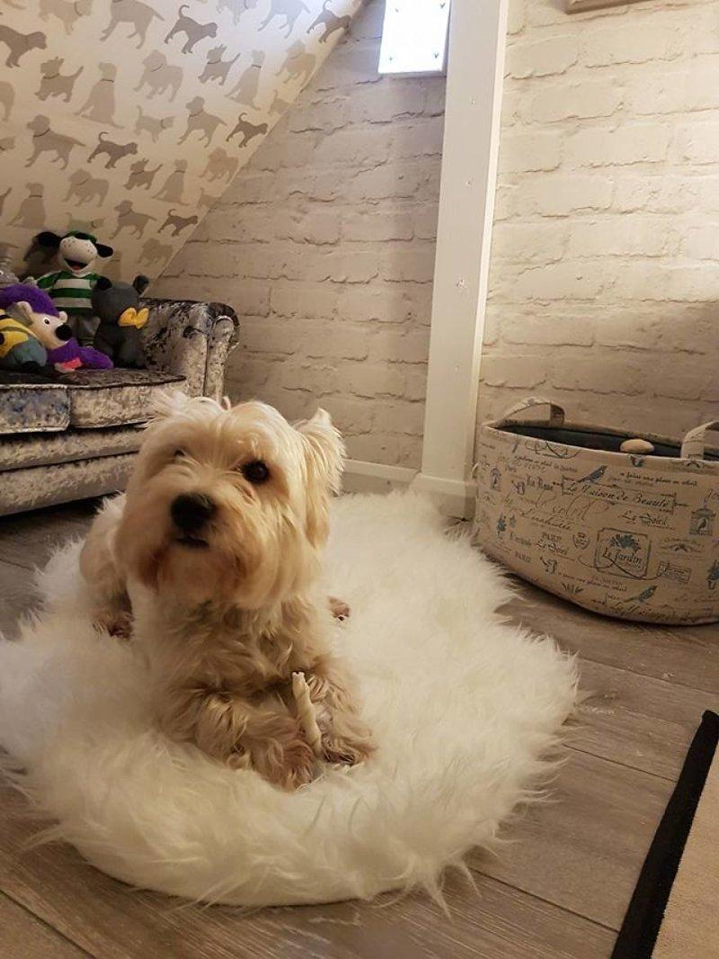 Молли в своей отдельной комнате идея, интерьер, комната, лестница, своими руками, собака, строительство