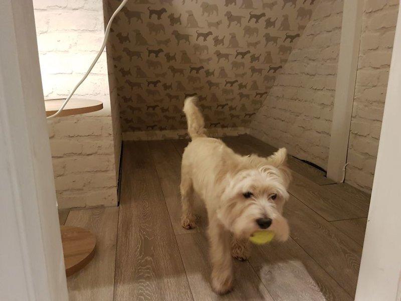 Пол после укладки ламината идея, интерьер, комната, лестница, своими руками, собака, строительство