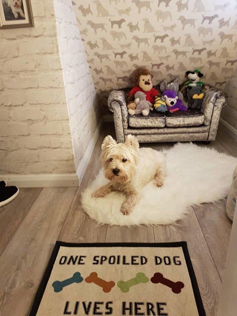Собачка в новых апартаментах идея, интерьер, комната, лестница, своими руками, собака, строительство