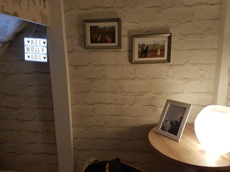 На снимках Молли с друзьями идея, интерьер, комната, лестница, своими руками, собака, строительство