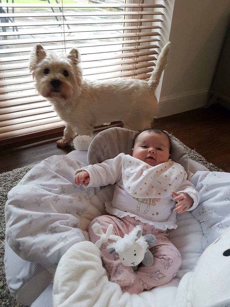 Молли с малышкой Кейтилин идея, интерьер, комната, лестница, своими руками, собака, строительство