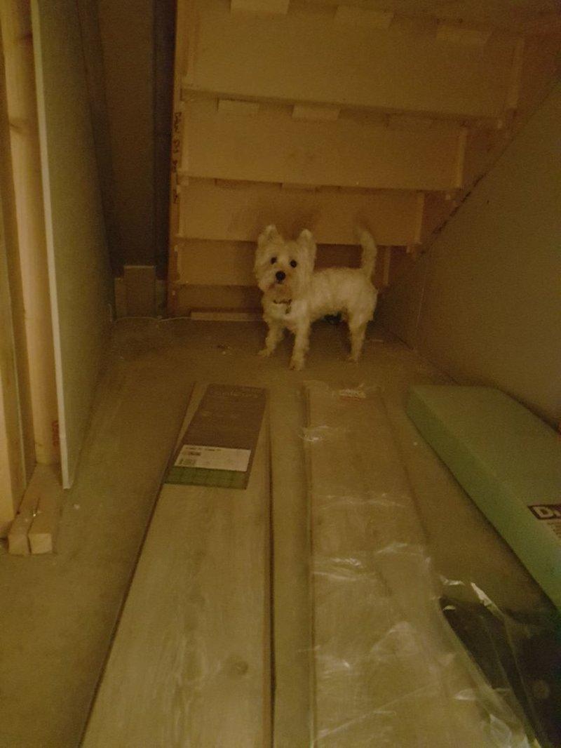 Молли тут же осмотрела свою будущую комнату идея, интерьер, комната, лестница, своими руками, собака, строительство