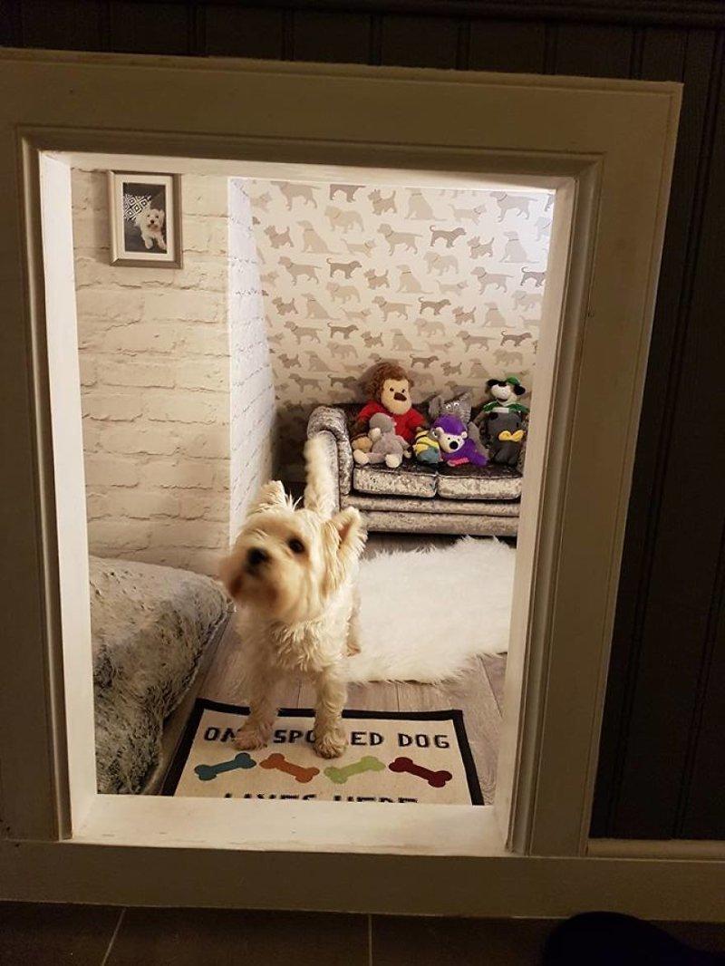 Хозяйка приглашает гостей идея, интерьер, комната, лестница, своими руками, собака, строительство
