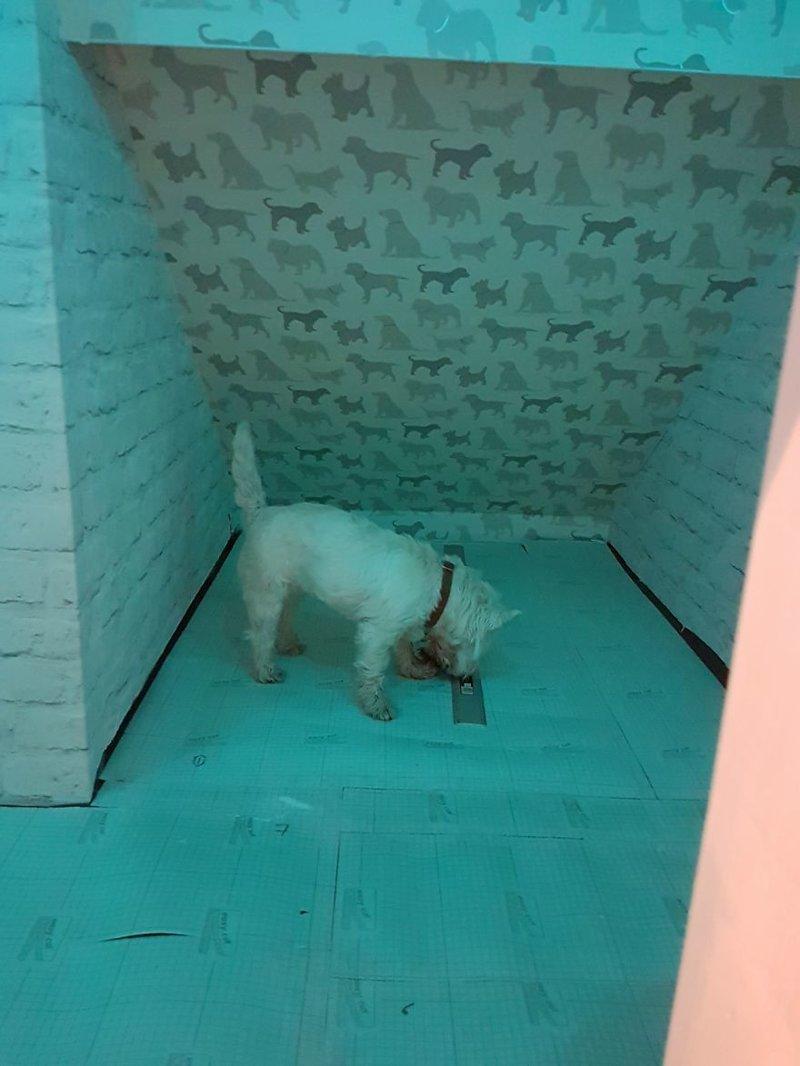 Цветное освещение идея, интерьер, комната, лестница, своими руками, собака, строительство