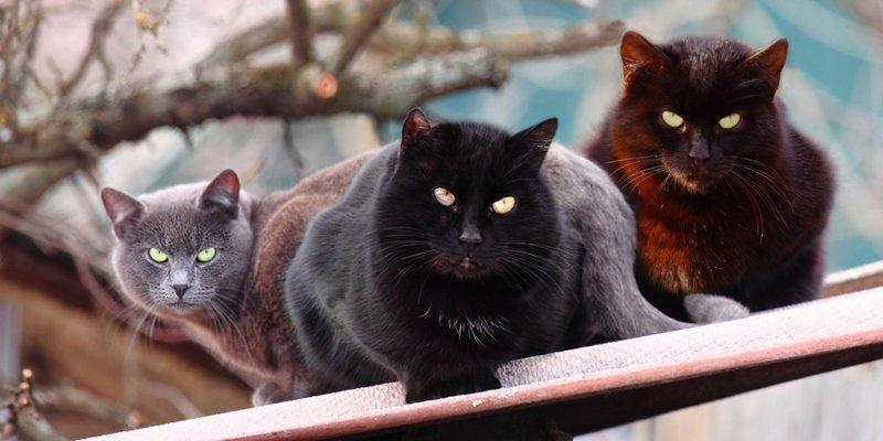 Бригады суровых котов коты, прикол, юмор