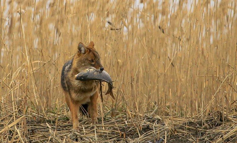 Бесценные минуты животные, факты, фото