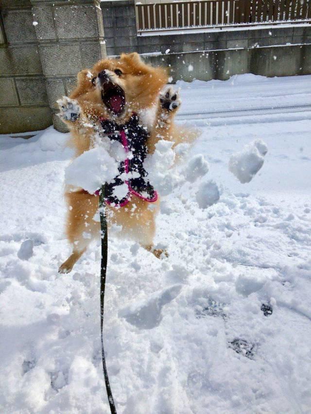 Игра со снегом день, животные, кадр, люди, мир, снимок, фото, фотоподборка