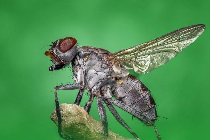 Большая заслуга в опылении цветов теперь переходит к мухам интересно, мир, природа, удивительное, факты