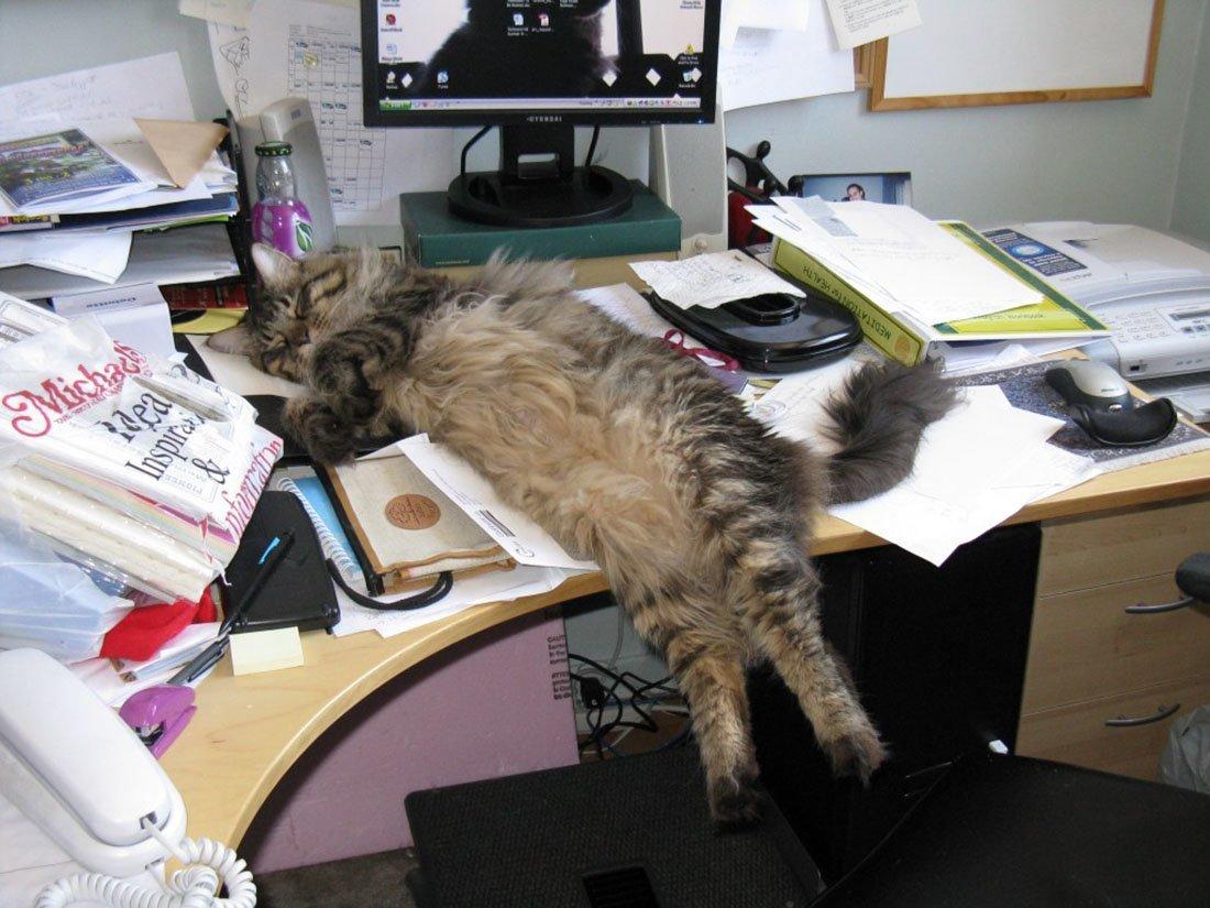 отличается фото с котом про работу мысль, возникающая при