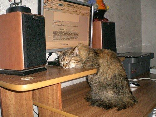 Резко устал животные, кот устал, коты