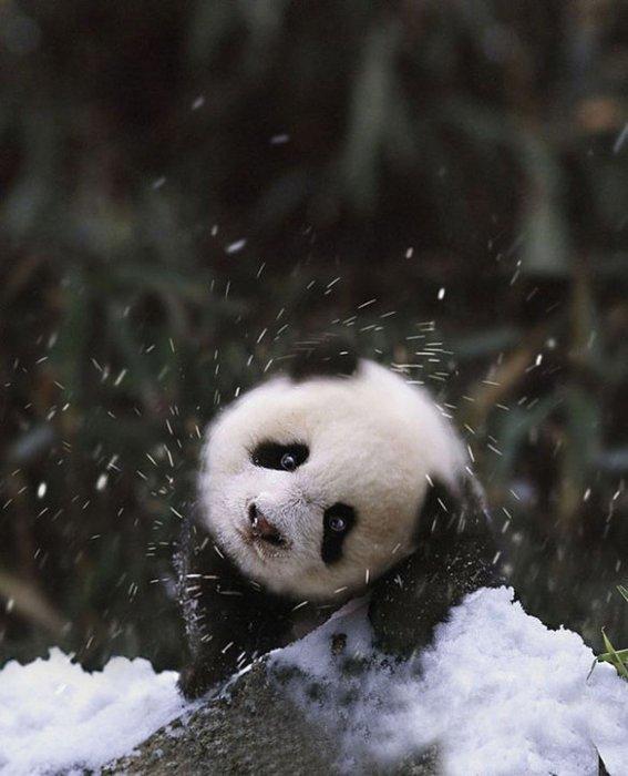 Забавные фотографии животных, которые в первый раз увидели снег животные, зима, снег