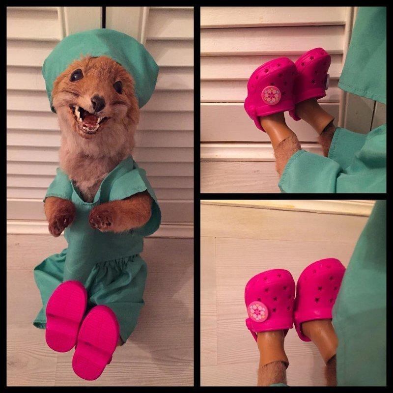 Женщина наряжает чучело лисы и повсюду носит его с собой в мире, животные, лиса, люди, чудики, чучело
