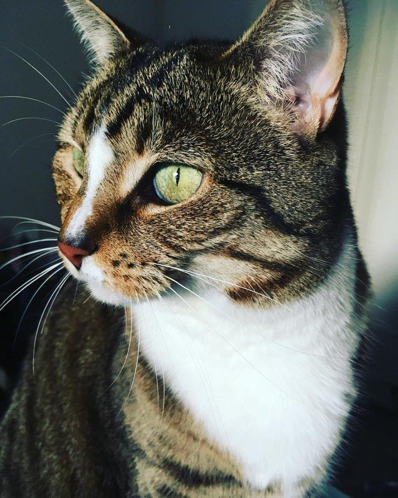 Австралийский котейка работает в парикмахерской не покладая лап австралия, животные, кот, лапы, милота, парикмахерская, работа