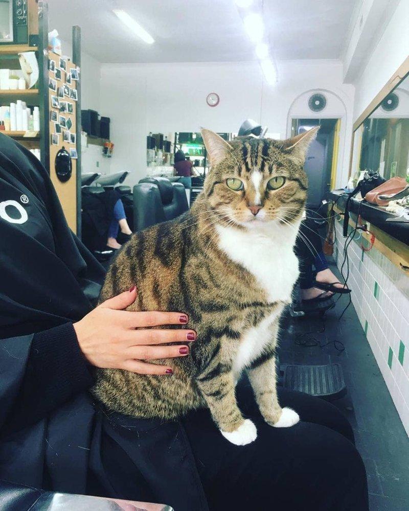 Если у людей, пришедших в салон, выдался плохой день, эта милашка в два счёта разделается с их тоской   австралия, животные, кот, лапы, милота, парикмахерская, работа