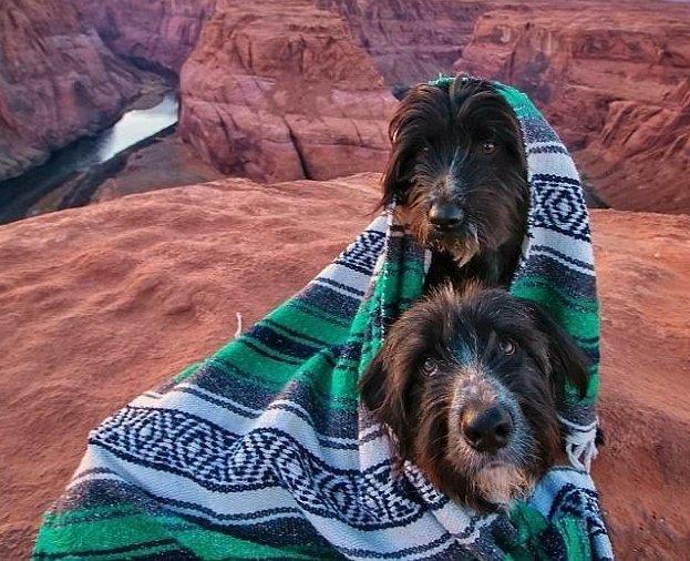 Путешественник спас двух бездомных щенков и объехал с ними всю Америку Счастливый конец, доброе сердце, по планете с собаками, путешественник, путешествие, собаки, спасенные животные, сша