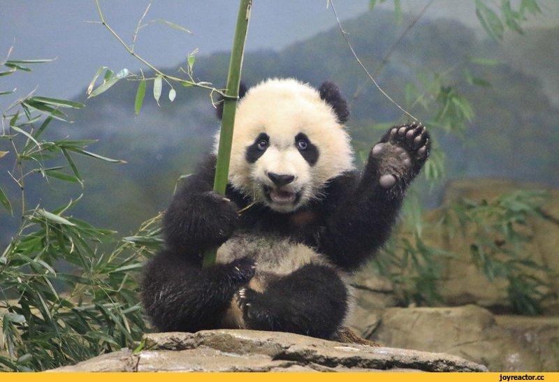 Панда и девушка трахаються