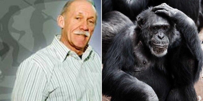 Нечеловеческий эксперимент: какая судьба постигла гуманзе, потомка шимпанзе и человека