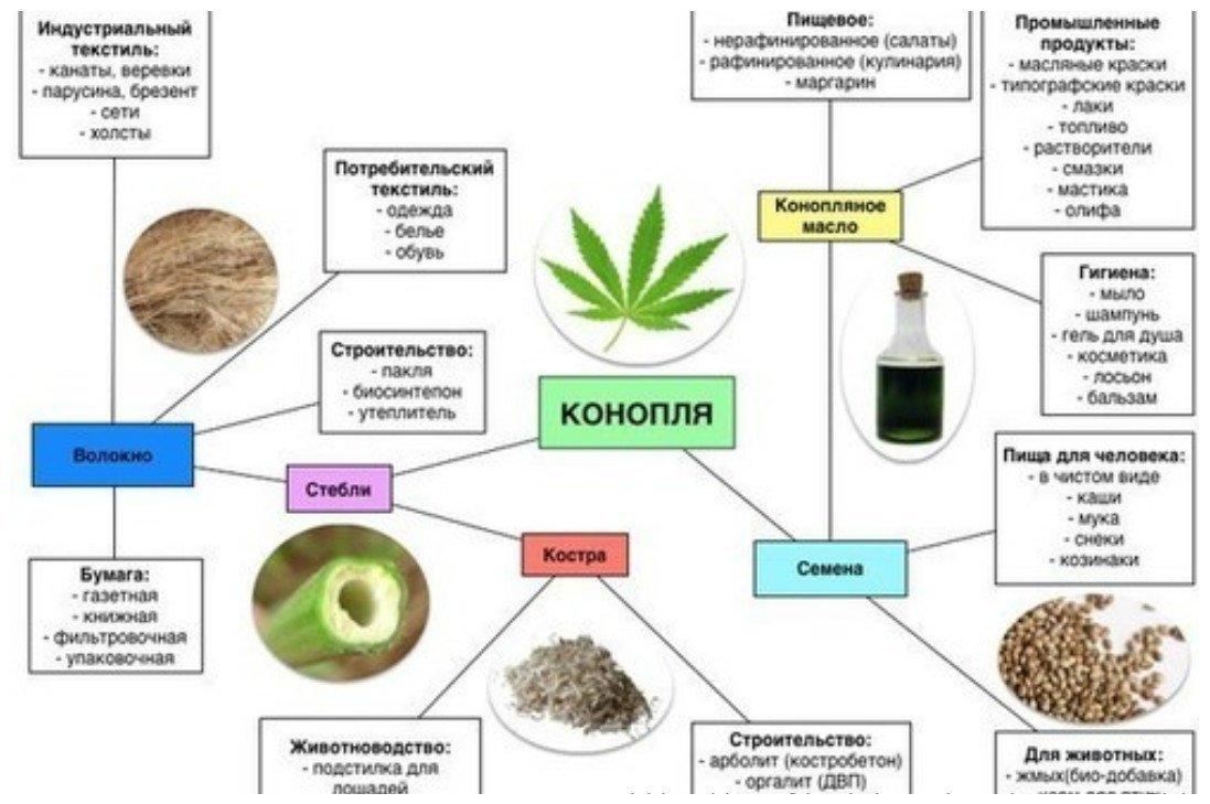 Смешной сорта конопли марихуана ростить