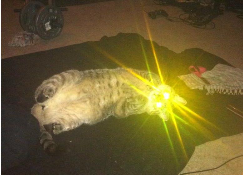 это только у кошки светятся глаза картинки усыпить пьяного человека