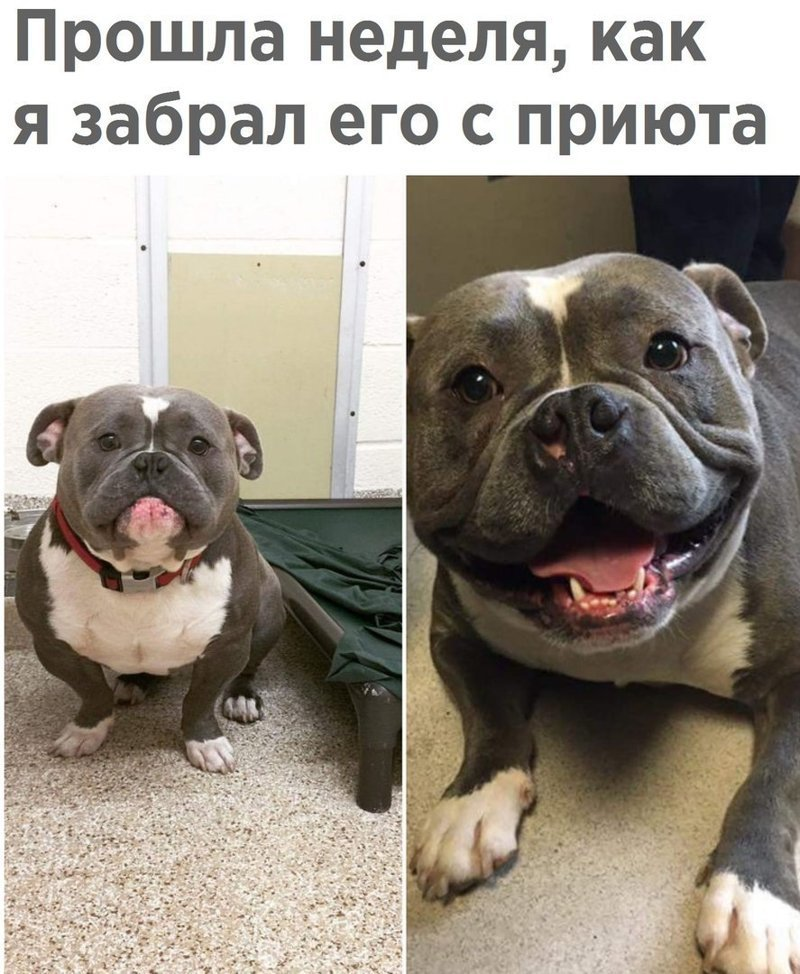 Самые смешные фото собак с надписями, для поздравления