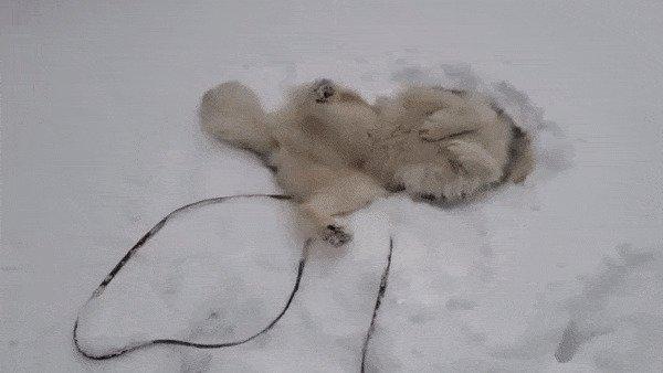 зима, казань, москва, погода, прикол, санкт- петербург, снег, юмор