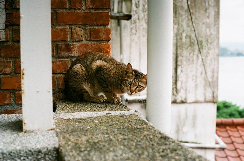 Taiwan, cats, filmed photography, street cats