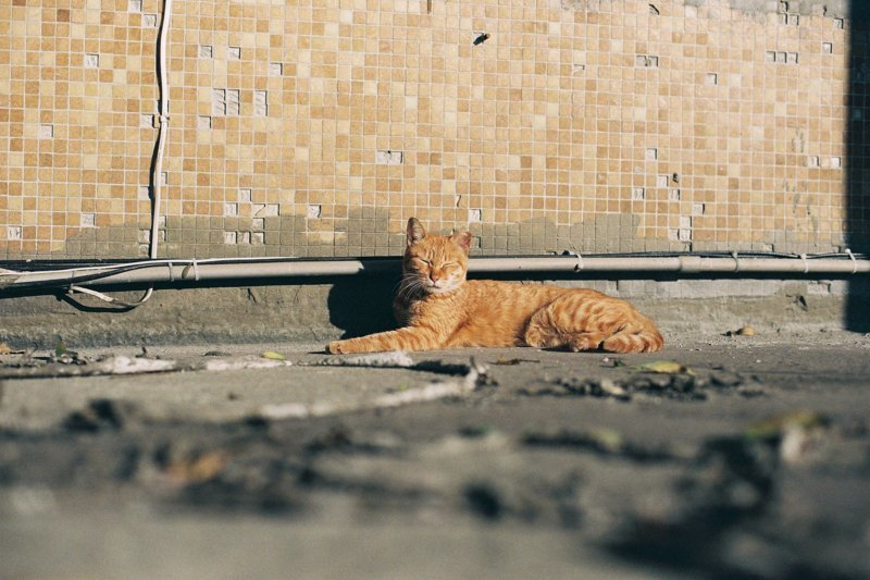 Taiwan, cats, filmed photography, street cats