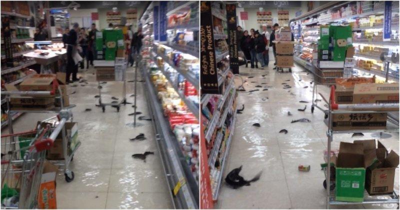 В грузинском супермаркете лопнул огромный аквариум с рыбой ynews, аквариум, видео, грузия, инцидент, магазин, рыба, супермаркет
