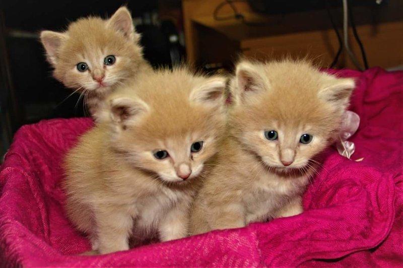 Картинки разных котят