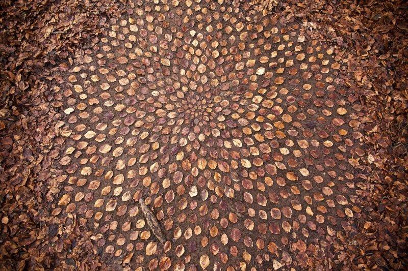 Художник тратит часы своего времени, создавая из природных объектов потрясающие мандалы Джеймс Брант, Мандалы, красота, природа, художник