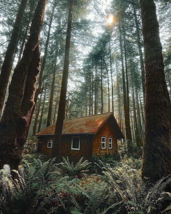 альбомы классные картинки лес дома выжившей
